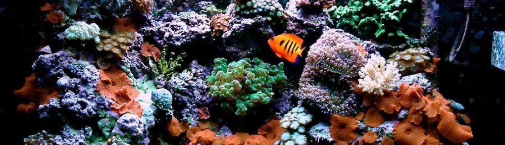Stanley's fish tank